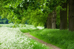 forêt de sentier piéton Photos libres de droits