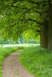 forêt de sentier piéton images libres de droits