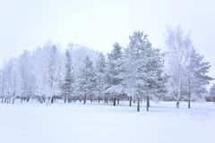 Forêt de Sibérien d'hiver photos stock