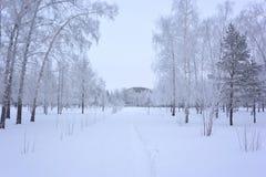 Forêt de Sibérien d'hiver photographie stock libre de droits