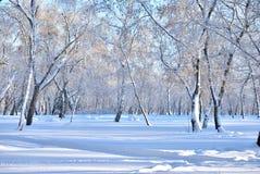 Forêt de Sibérien d'hiver image stock