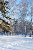 Forêt de Sibérien d'hiver images stock