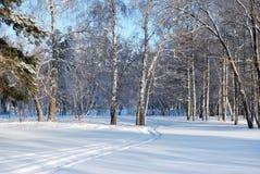 Forêt de Sibérien d'hiver images libres de droits
