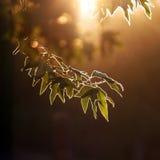 Forêt de soirée Images libres de droits