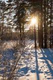 Forêt de soirée Images stock