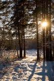 Forêt de soirée Photo stock