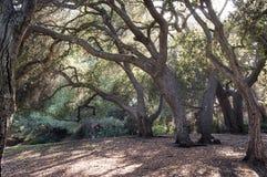 Forêt de soirée Image stock