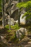 Forêt de source Photos stock