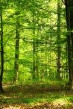 Forêt de source Photographie stock libre de droits