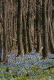 Forêt de source Photo libre de droits