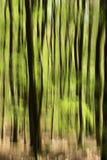 Forêt de source Images stock