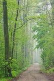 Forêt de source avec le journal image stock