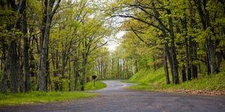 Forêt de source de croisement de route Image stock