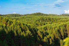 Forêt de Taiga Photographie stock libre de droits