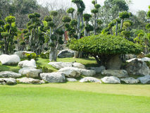 Forêt de Tako Images libres de droits
