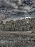 Forêt de tempête image libre de droits