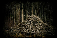 Forêt de terre en friche   Photographie stock libre de droits