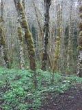 Forêt de Tillamook Photographie stock