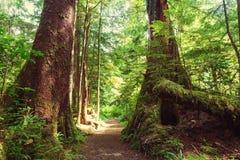 Forêt de Vancouver Photo stock