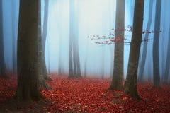 Forêt de vieille galoche images stock