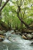 Forêt de village de Steni Dirfyos et rivière, Euboea, Grèce photographie stock