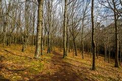 Forêt de Vixiador - Vigo - Galicie, Espagne Photo stock
