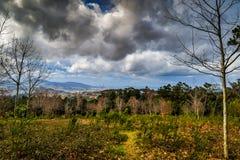 Forêt de Vixiador - Vigo - Galicie, Espagne Image stock