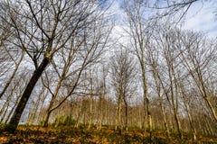 Forêt de Vixiador - Vigo - Galicie, Espagne Images stock