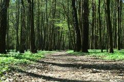 Forêt de voie au printemps Photographie stock
