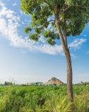 Forêt de yucca images libres de droits