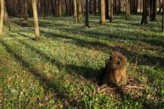 Forêt de zone inondable Photographie stock libre de droits