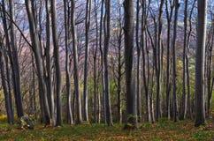 Forêt dense aux montagnes de Homolje un jour ensoleillé d'automne Images libres de droits