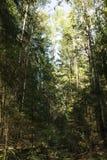 Forêt dense, nature dans le village photographie stock libre de droits