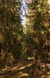 Forêt dense, nature dans le village photos libres de droits