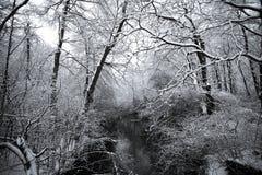 Forêt des hivers image libre de droits