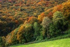 Forêt différente d'automne d'arbres Photographie stock