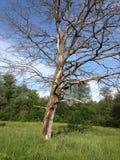 Forêt du Belarus Photographie stock