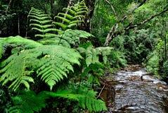 Forêt du Brésil Image libre de droits