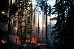 Forêt du feu images libres de droits