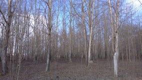 Forêt du nord Image stock