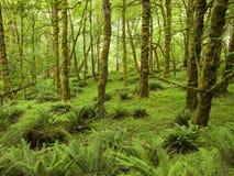 Forêt du nord-ouest photos stock