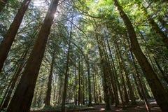 Forêt du nord-ouest de Pacfic Photographie stock libre de droits