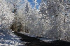 Forêt du pays des merveilles d'hiver Photographie stock