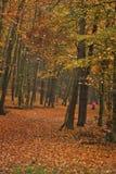 Forêt du ` s d'automne photo libre de droits