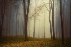 Forêt effrayante Photo libre de droits