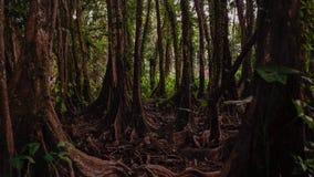Forêt effrayante dans un endroit dans la forêt d'Amazone Photos libres de droits