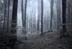 Forêt effrayante de vieille galoche photos stock