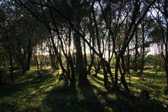 Forêt en automne Image libre de droits