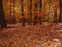 Forêt en automne Photos stock