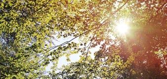 Forêt en automne Photos libres de droits